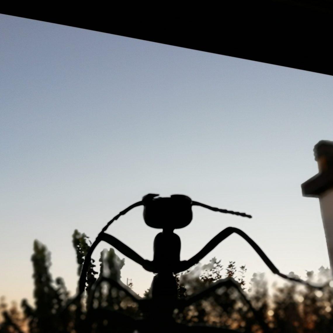 Gertrude in veranda