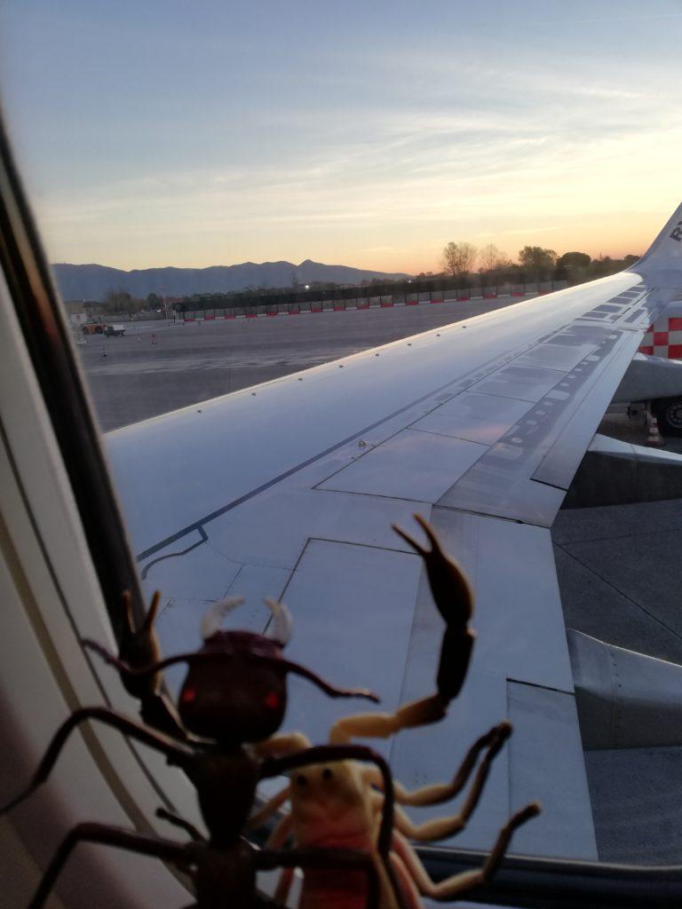 in viaggio per New Insectt